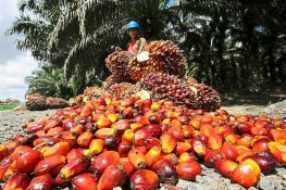 Third Amendment to Regulation No. 29 / M-DAG / PER / 6/2013 On Export Verification of Crude Palm Oil (CPO)