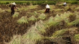 Ministry of Agriculture: Agricultural Exports in January, US $ 2.28 Billion