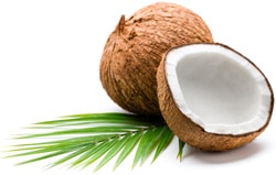 Fact Sheet: Coconut