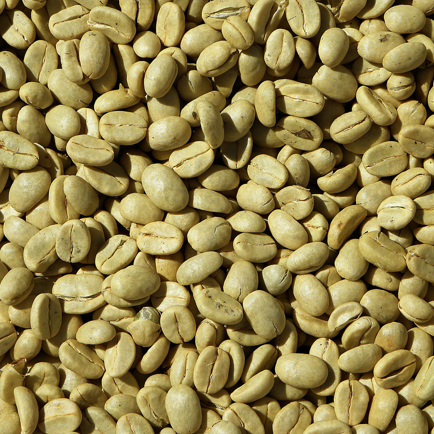 Unroasted Coffee Beans >> Green Bean Coffee Indonesian Trade Promotion Center Busan